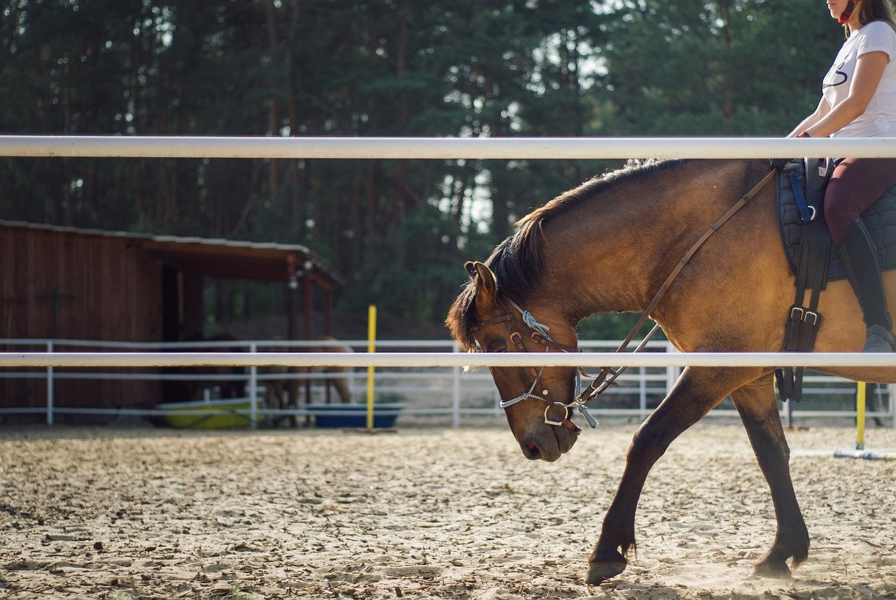 Où faire de l'équitation à La Rochelle ?